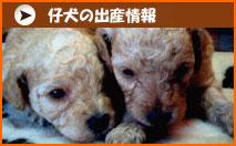 仔犬の出産情報